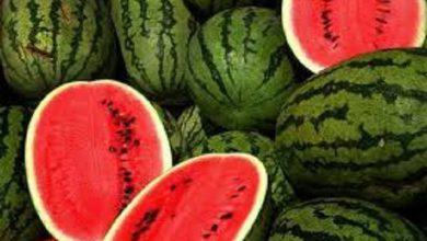 تصویر از هندوانه به شرط تریاک