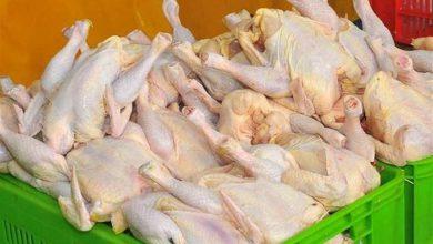 تصویر از زیان ۲ هزار و ۳۰۰ میلیارد تومانی مرغداران به دلیل عدم توازن عرضه و تقاضا