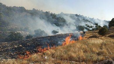 تصویر از عاملان آتشسوزی کوه خائیز دستگیر شدند| ۴۰ هکتار جنگل و مرتع در آتش سوخت