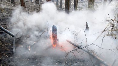 Photo of آتشسوزی جنگلهای لنده مهار شد