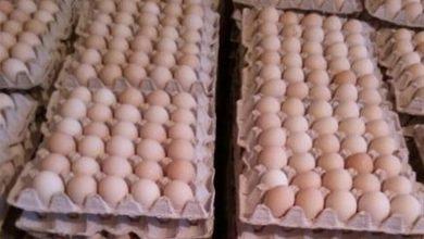 تصویر از تخم مرغ دوباره دو نرخی شد