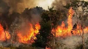 تصویر از ماجرای آتش سوزی های مشکوکِ این روزها