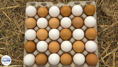 تصویر از تخم مرغ شانه ای ۳۰ هزار تومان شد
