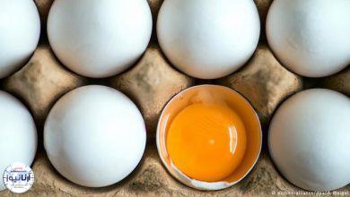 تصویر از تخم مرغ بسته بندی شانه ای ٣١ هزار تومان